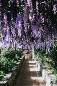 Hanging purple flowers at this Positano wedding weekend in Villa Tre Ville | Photo by Gianni di Natale